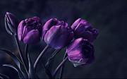 Purpleflowersthatbloomatnight1freew